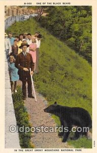 Black Bears Great Smoky Mountains National Park Postcard Post Card unused