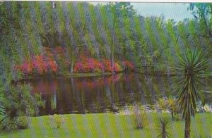 South Carolina Charleston Middleton Gardens Beautiful Scene 1959