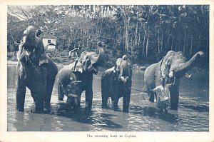 Elephant Post Card The Mornign Bath Ceylon 1929
