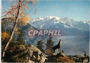 Modern Postcard The Pyrenees Isard