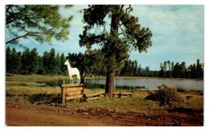 1950s/60s Whitehorse Lake Forest Camp near Williams, AZ Postcard *5N31