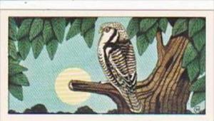 Glengettie Tea Trade Card Rare British Birds No 19 Hawk Owl
