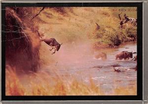 Kenya Wilderbeast in Action Buffalo ,butterfly stamp