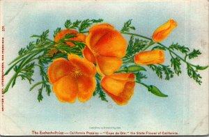 California Poppies Copa de Oro c1905 pretty flowers