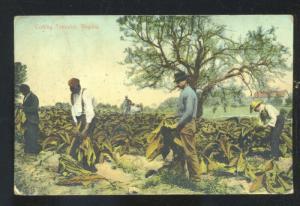 CUTTING TOBACCO VIRGINIA BLACK AMERICANA BLACK FARMER FARMING POSTCARD