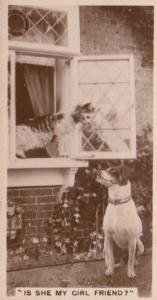 Cat Cats At Window To Dog Lover German RPC Cigarette Card