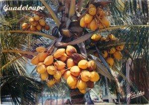 Guadeloupe coconut tree postcard