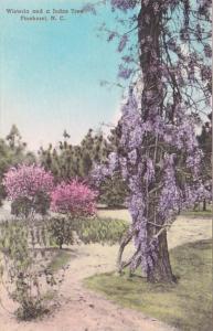 North Carolina Pinehurst Wisteria and Judas Trees Handcolored Albertype