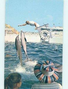 Pre-1980 AQUARIUM TOURIST ATTRACTION St. Petersburg Florida FL AF9091
