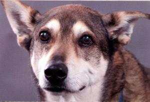Brindle Colored Dog