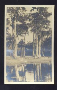 RPPC SILVER SPRINGS FLORIDA MAJESTIC CYPRESS TREES VINTAGE