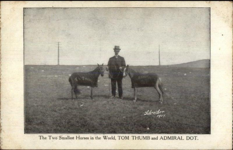 Two Smallest Horses in the World Tom Thumb & Admiral Dot c1910 Postcard