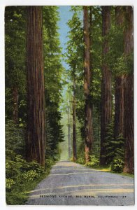 Big Basin, California, Redwood Avenue