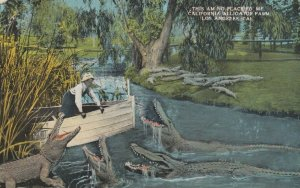 CALIFORNIA , 00-10s ; No Place for Me , Alligator Farm