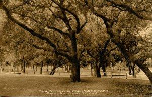 TX - San Antonio. San Pedro Park, Oak Trees