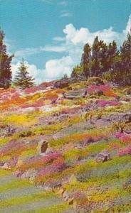 Washington Wenatchee Ohme Gardens