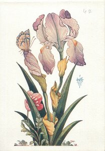 Iran miniature iris flower Postcard