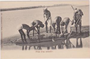 Prise d'un crocodile - Egypt , 1898-1907