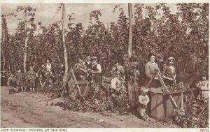 TUNBRIDE WELLS , UK , 1910s ;  Hop-Pickers