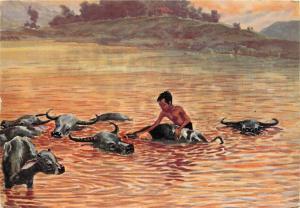 Evening bath of the waterbuffaloes postcard Java Indonesia