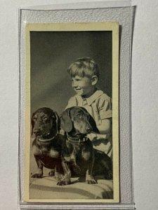 CIGARETTE CARD - CARRERAS DOGS & FRIEND #46 THE DACHSHUND  (UU243)