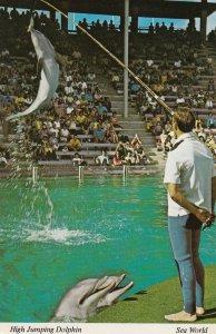 SAN DIEGO, California, 1950-60s; SEA WORLD, High Jumping Dolphins
