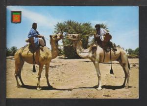Camels,Morocco Postcard