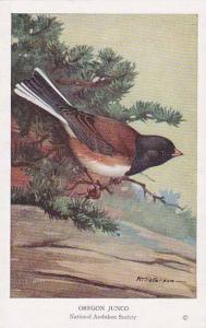 AS: R. T. Peterson, Bird, National Audubon Society, Oregon Junco, 1920-1930s