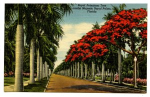 FL - Royal Poinciana Tree & Royal Palms