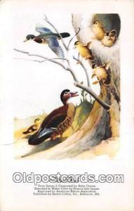 Wood Duck Postcard Post Card  Wood Duck