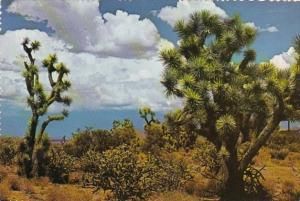 Cactus Joshua Trees