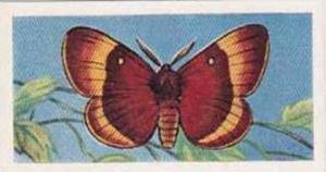 Swettenham Vintage Trade Card Butterflies & Moths 1958 No 22 Oak Eggar