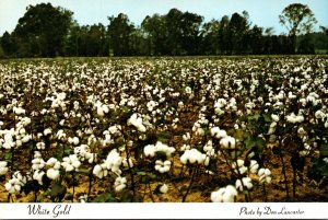 Tennessee Memphis Cotton Capitol Of The World Beautiful Cotton Field White Gold