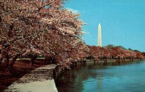 Cherry Blossom Time,Washington,DA
