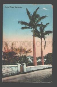 090291 BERMUDA Palm Trees Vintage PC