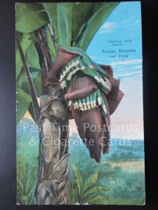 Greetings from Jamaica Banana Blossoms and Fruit c1935
