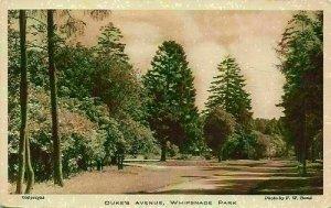 Duke's Avenue Whipsnade Park Promenade Postcard