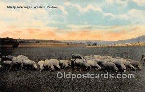 Western Pasture Sheep Grazing Unused