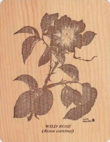 Wild Rose Postcard Made Of 2 Pieces Of Spruce Tree Signed Dana Harter
