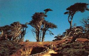 Sylvan Footpath Cypress Trees 17 Mile Drive Carmel, CA 1958 Vintage Postcard