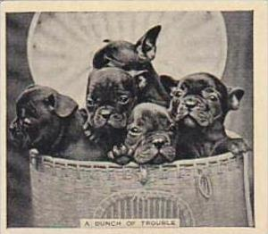 Phillips Cigarette Card Our Favorites No 23 Puppies In A Basket