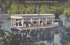 Florida Silver Springs Feeding The Black Bass 1951