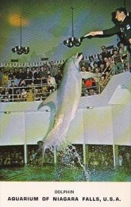 Aquarium Of Niagara Falls Dolphin U S A Niagara Falls New York