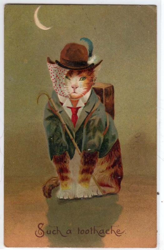 Dressed Cat - Such a Toothache