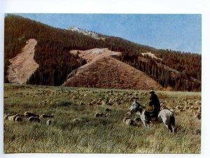 238943 Kyrgyzstan Alpine meadows HORSEMAN old postcard