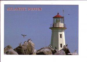 Atlantic Puffin, Lighthouse, Nova Scotia, Canada,