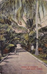 Florida Palm Beach Avenue Of Cocoanuts