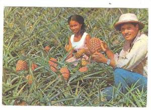 Pine apple gathering, Martinique, France, 50-70s