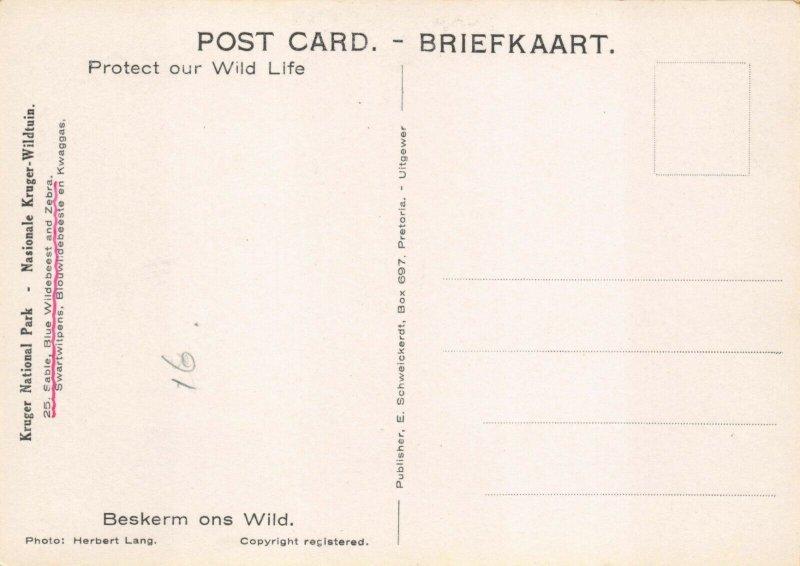 Vintage Postcard No.25 Zebra & Blue Wildebeest Kruger National Park S Africa 37Y