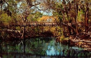 Florida Tampa Suspension Bridge At Hillsborough River State Park